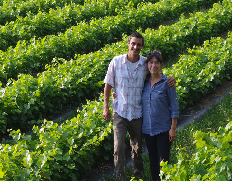 Grapevine Nurseries, Red Wine grapevines, White Wine Grapevines